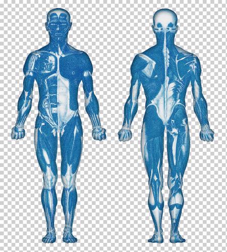 جسم الانسان